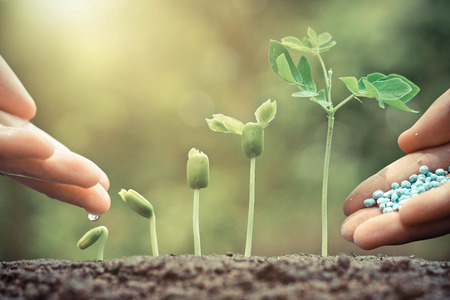 chemical fertilizer: Hand nurturing young plants growing in germination sequence with chemical fertilizer