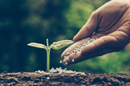 chemical fertilizer: hand of a farmer giving fertilizer to young green plants  nurturing baby plant with chemical fertilizer Stock Photo