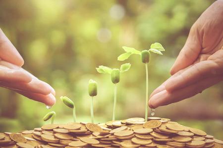 germinación: Manos riego plantas de bebé jóvenes que crecen en secuencia de germinación en monedas de oro  concepto de negocio verde