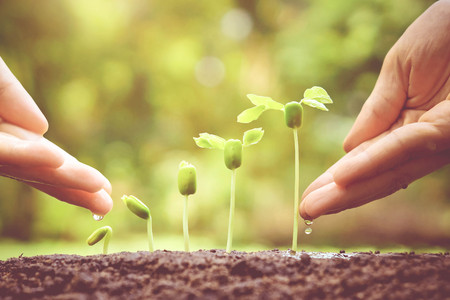 Agriculture. Growing plants. Plant seedling. Hand nurturing and watering young baby plants growing in germination sequence on fertile soil with natural green background Stock Photo