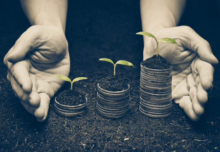 environmental concern: hands holding trees growing on coins  csr  sustainable development  economic growth  trees growing on stack of coins  Business with environmental concern