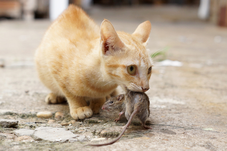 caching: Cat caching mouse