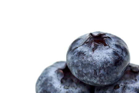 Blue berry close up isolated with blank space to add text