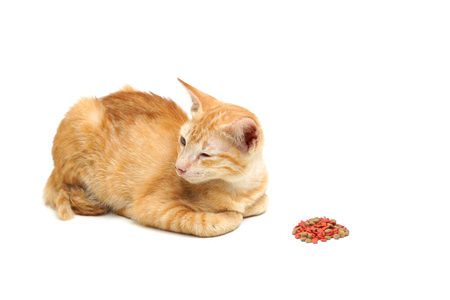 A sick cat not eating food isolated on white