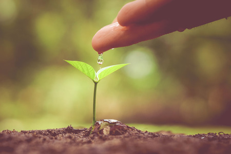plant hand: hand nurturing and watering a young plant  Love and protect nature concept  nurturing baby plant