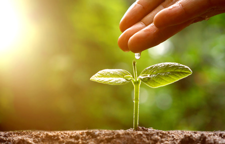 plant hand: Agriculture  Hand pouring water to a young green plant with morning sunlight  Nurturing baby plant  protect nature  planting tree Stock Photo