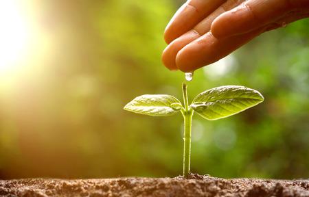 Landbouw  Hand gieten van water aan een jonge groene plant met ochtend zonlicht  Verzorgende babyinstallatie  beschermen natuur  boom plant Stockfoto