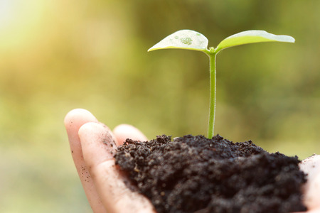 Hands of farmer growing and nurturing tree growing on fertile soil with green and yellow bokeh background  nurturing baby plant  protect nature Stock Photo