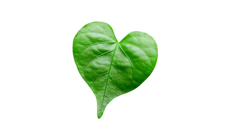 leaf shape: Green leaf in a heart shape isolated Stock Photo