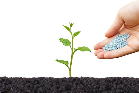 germinate: Hand giving chemical fertilizer to a plant isolated  Agriculture