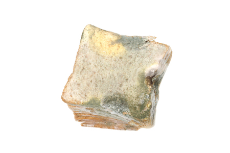 Bread full of mold  Expired and damaged product Stock Photo