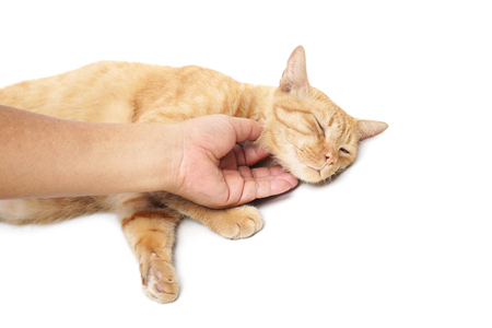 gently: hand gently touching and rubbing a cats neck Stock Photo