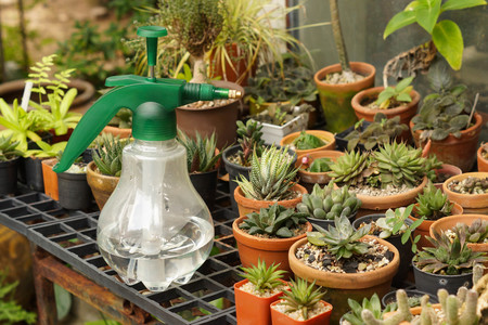 spaying: Water spaying bottle and cactus  cactus farming