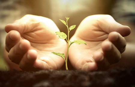 Growing a tree. Hands holding and nurturing a green plant growing on fertile soil with warm sunlight  Protect nature