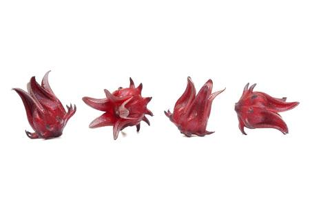 Roselle / Hibiscus sabdariffa L.