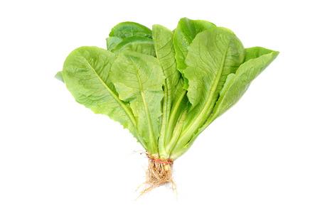 romaine lettuce: Cos Romaine Lettuce Stock Photo