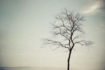 leafless: Silhouette of a leafless tree