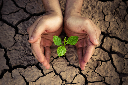 scarcity: Love and protect nature. Hands holding a tree growing on cracked ground. Save the world. Environmental problems. Growing tree.