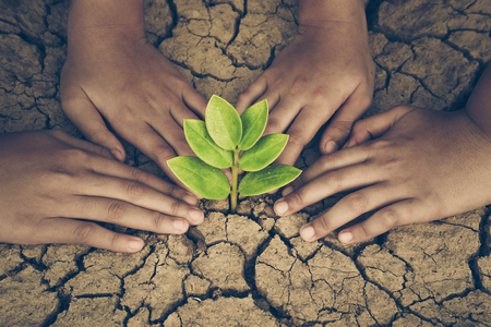 Hands of young people looking after a young green plant growing on dry, cracked ground. Protect nature Stock Photo - 71217243