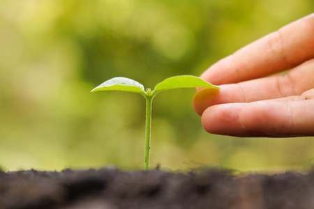 Hand gently touching a young baby plant growing on fertile soil with green background  Love nature