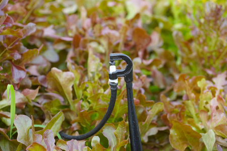 Watering tool for hydroponic vegetable