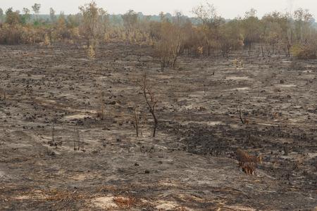 タイの農業の土地の伐採し、燃焼森林破壊