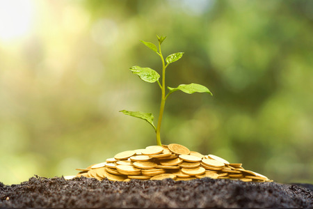 A tree growing from pile of coins  CSR and green business  business ethics