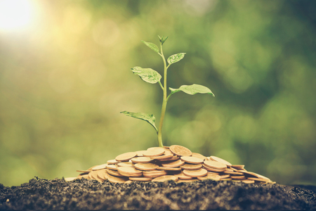 A tree growing from pile of coins / CSR and green business / business ethics 스톡 콘텐츠