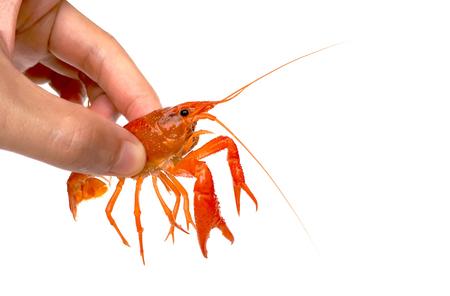 Hand holding a crayfish  Crayfish farming concept Stock Photo