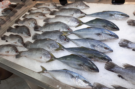 silver perch: Fresh sea fish on ice stall Stock Photo