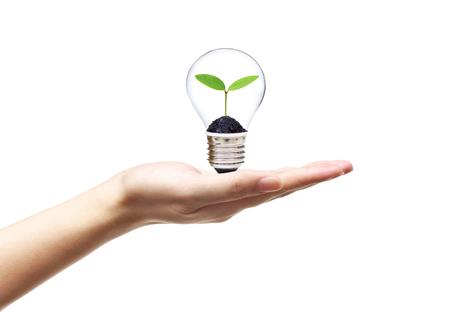 Bergeben Sie das Halten einer Glühlampe mit einer jungen Grünpflanze, die nach innen / grüne Energie für nachhaltiges lebendes Konzept wächst Standard-Bild - 88968549