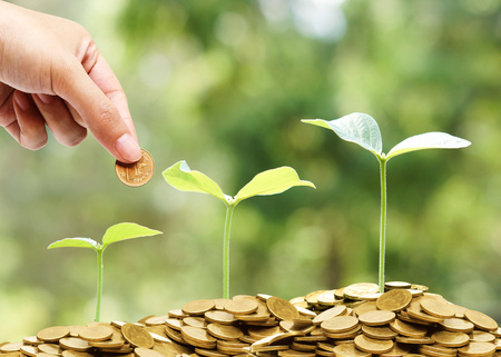 Hand giving a coin to trees growing on golden coins with natural green background  Sustainability of Business with csr practice