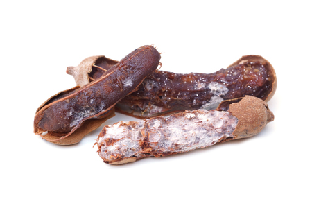 Rotten tamarind full of mold