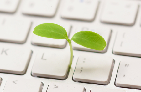 A small green plant growing from white computer keyboard  Green computing  Moral and Ethics in information technology