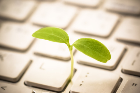 Tree growing on a computer keyboard  Green IT and Computing