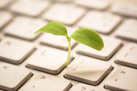 Tree growing on a computer keyboard / Green IT and Computing 스톡 콘텐츠