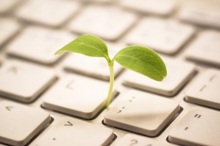 Tree growing on a computer keyboard / Green IT and Computing Standard-Bild