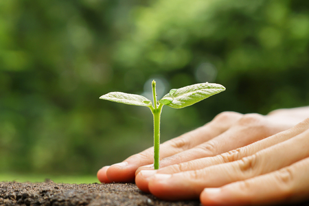 Hands growing and nurturing tree with green bokeh background  Love and protect nature concept