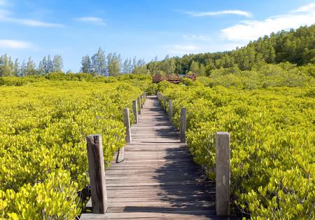 Tung Prong Thong - Mangrove Forest Boardwalk at Pak Nam Krasae, Klaeng District, Rayong, Thailand Фото со стока