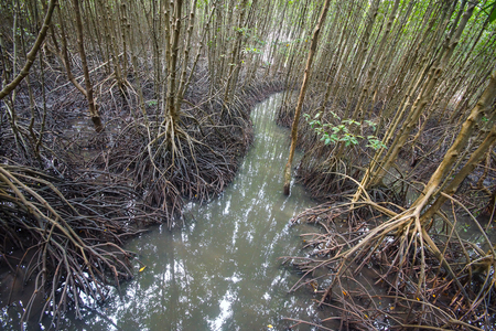 Mangrove forest at Kung Krabaen Bay Royal Development Study Center Stock Photo