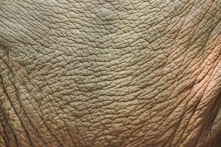 Elephant skin texture Stockfoto