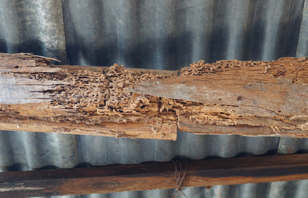 Wood structures in the house destroyed by termites Фото со стока