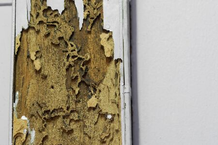 A termite nest on wooden pole of a room / Termite problem in house concept Standard-Bild - 126832448