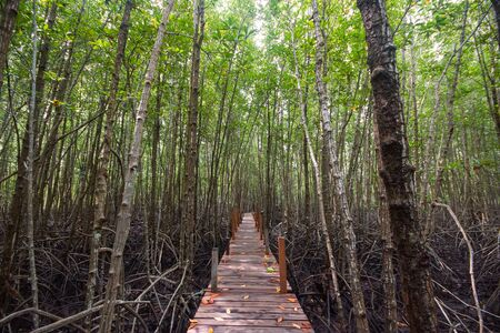 Tung Prong Thong - Mangrove Forest Boardwalk at Pak Nam Krasae, Klaeng District, Rayong, Thailand Stockfoto