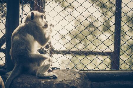 Monkey staying in the cage, looking out