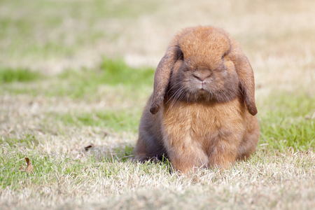 New born rabbit or cute bunny on green grass. Stock Photo