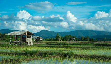 wooden hut: wooden hut