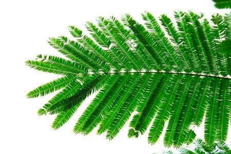 small leaf Banco de Imagens - 23498639