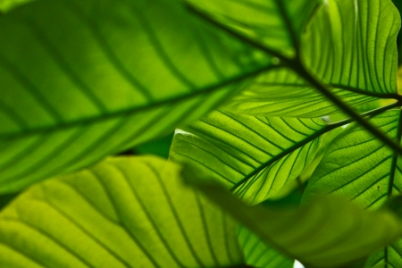 leaf Banco de Imagens - 23498640