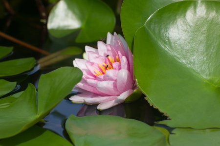 Lotus flower Banco de Imagens - 23573962